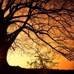 wintersilhouet treurwilg