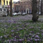 Voorjaar Lange Voorhout Den Haag